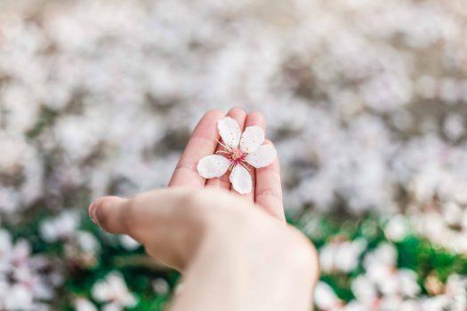 花びらが手のひらにのっている