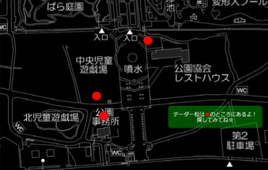 浜寺公園 松ぼっくり