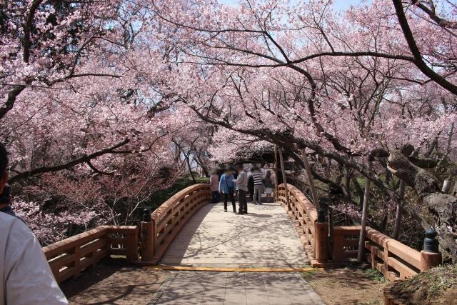 高遠城址公園 桜祭り